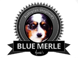 bluemerleaussies